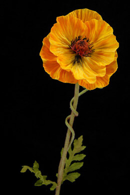 Natural touch mango orange poppy flowers 4 2260g natural touch orange poppy flowers mightylinksfo Image collections