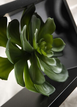 Echeveria Green Natural Touch Succulent 6in