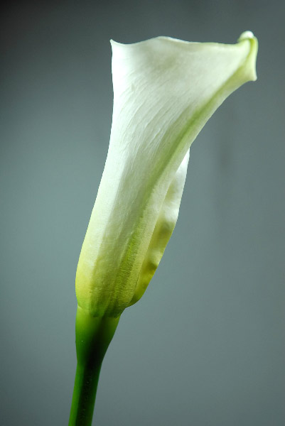 Natural Touch Flowers Medium Calla Lily 25 Quot