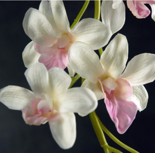 White Orchid Water Pink: Natural Touch Pink & White Dendrobium Orchid Stem