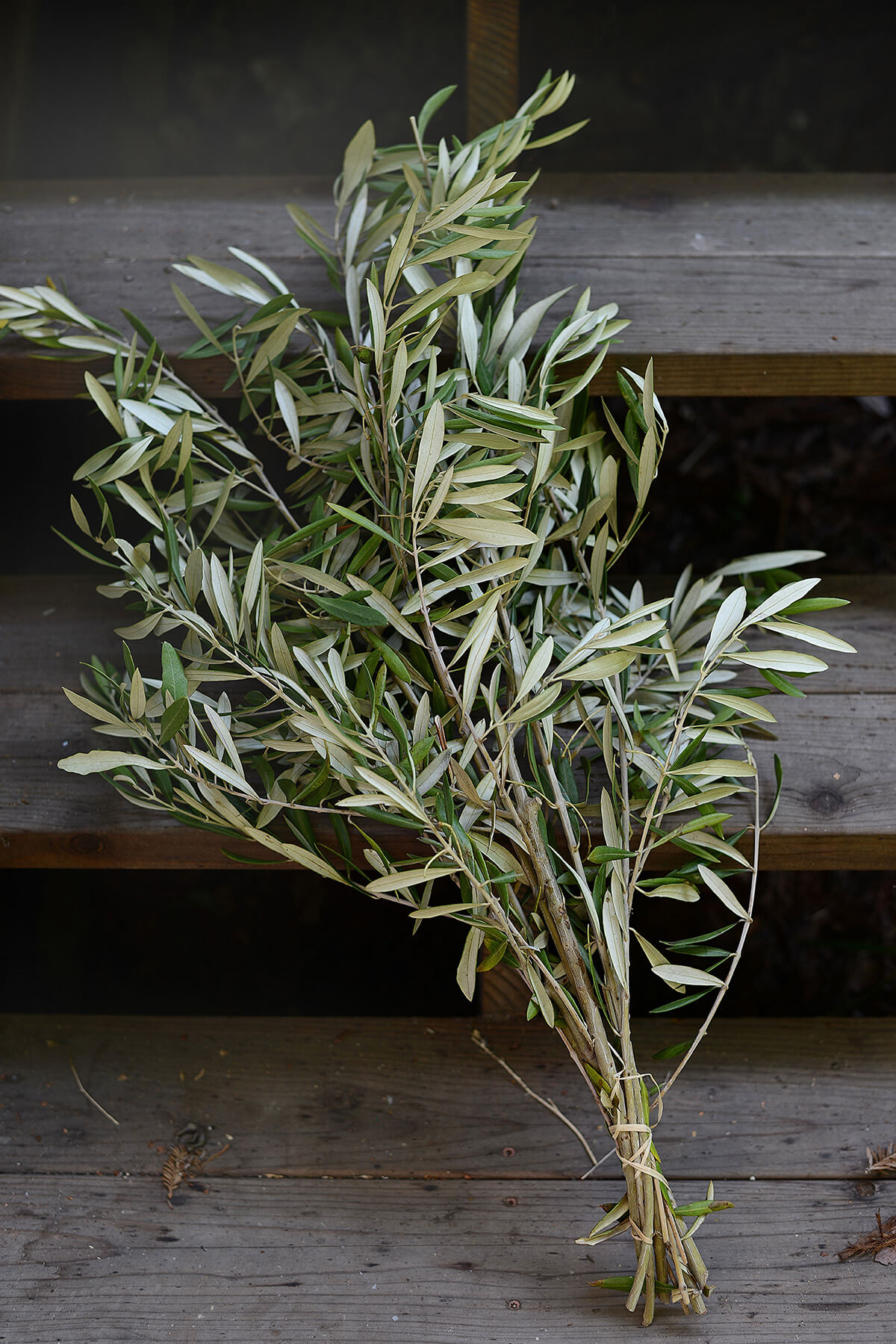 Fresh Olive Branches 20 Branches