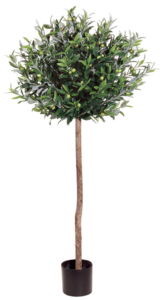 Olive Topiary 4 5ft