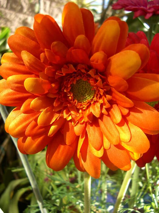 One Dozen Orange Silk Gerbera Daisy Flowers