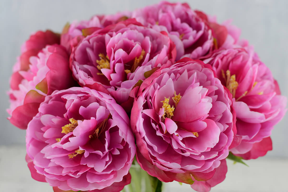 Perfect pink peony flowers 13 12 perfect pink peony flowers 13 dhlflorist Images