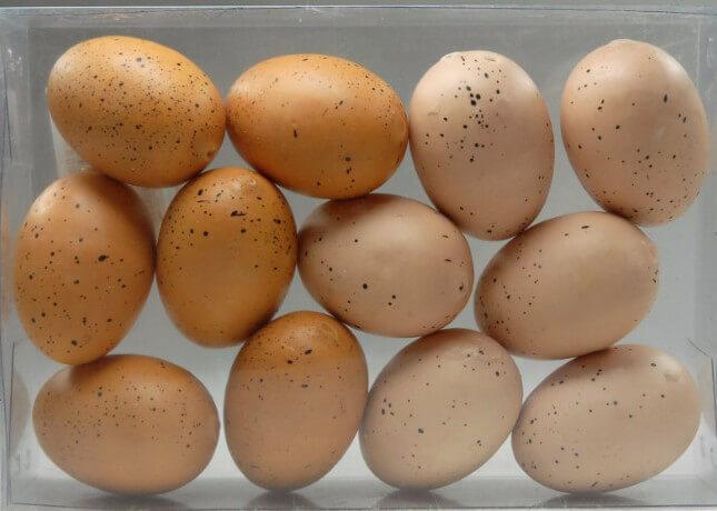 Artificial Pheasant Eggs (12 eggs) Brown