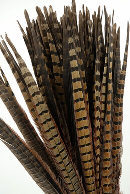 Pheasant Feathers 18in|Pack of 100
