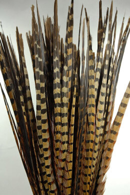 "100 Ringneck 26"" Highest Quality Pheasant Feathers"