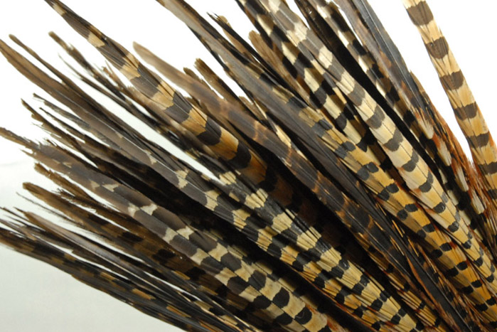 """100 Ringneck 26"""" Highest Quality Pheasant Feathers"""