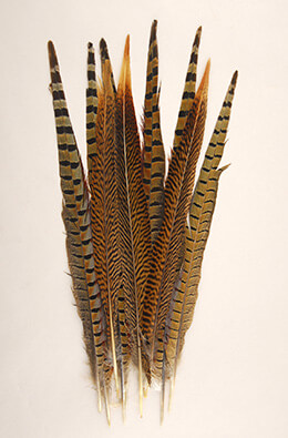 10 Pheasant Tail Feathers 14-18 Inch
