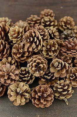 Pine Cones Natural 1lb 35-45 cones