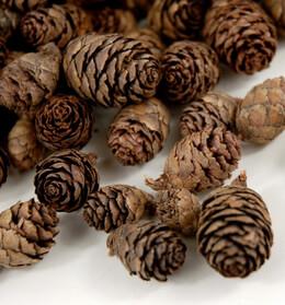 Pine Cones Spruce (2 Quarts)