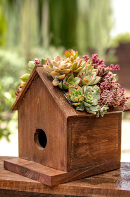 Plantable Birdhouse 8in