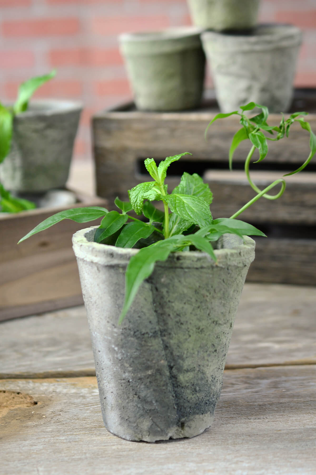 cement flower pots 4-1/2 inch