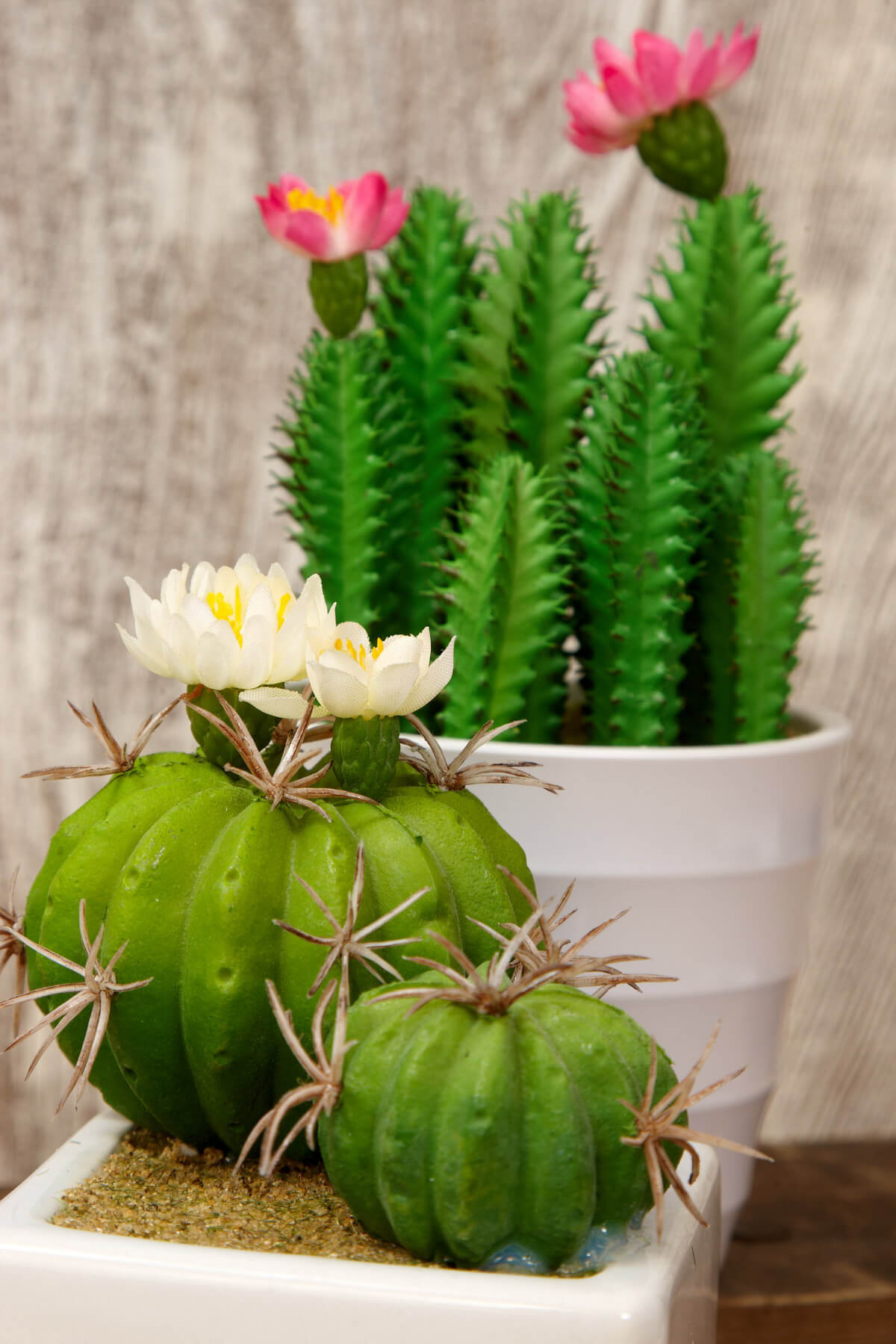 6 Potted Cactus 7 5 Quot