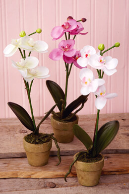 3 Potted Orchids Cream, Pink & White