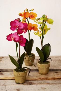 3 Potted Orchids Fuchsia, Orange & Green