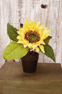 """Potted Sunflower Plant 7-1/2"""""""