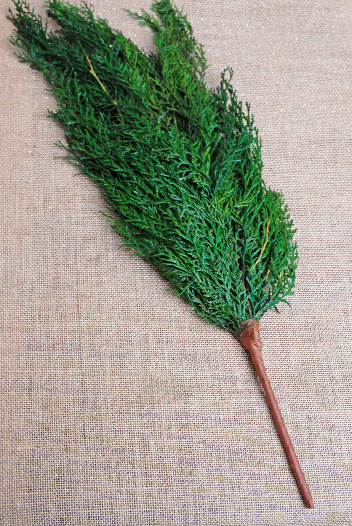 Preserved Cedar Branches 22in