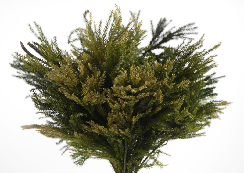 Princess Pine Preserved Fern Basil Green 4oz 10in