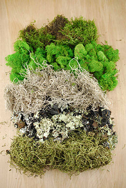 Preserved Moss Assortment 5oz