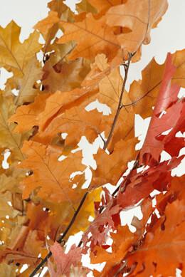 Preserved Golden Orange Oak Branches 22-24 in.