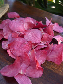 Preserved Pink Orchid Petals
