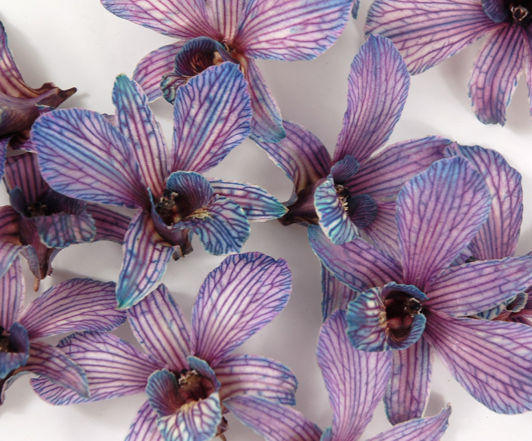 30 Violet Preserved Orchid Flowers