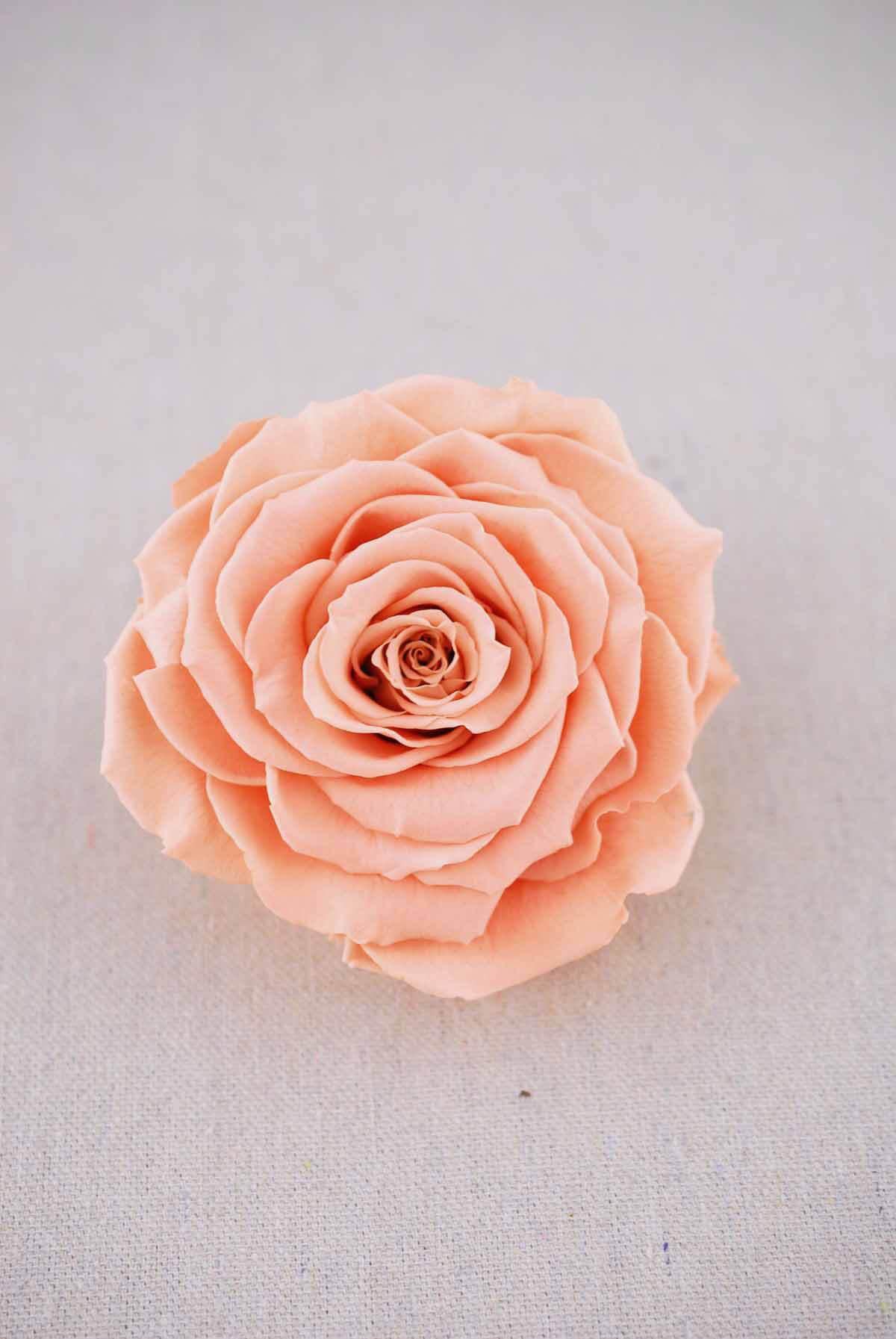 preserved roses 4 peach - Peach Garden Rose