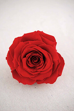 "Preserved Roses 4"" Red"
