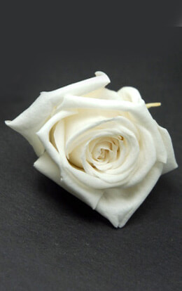 Preserved Roses White 1in (12 roses)