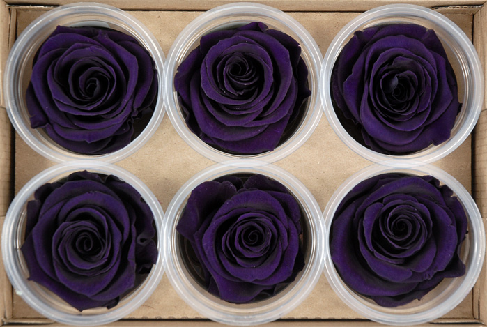Preserved Roses 2.5in Purple (6 roses)