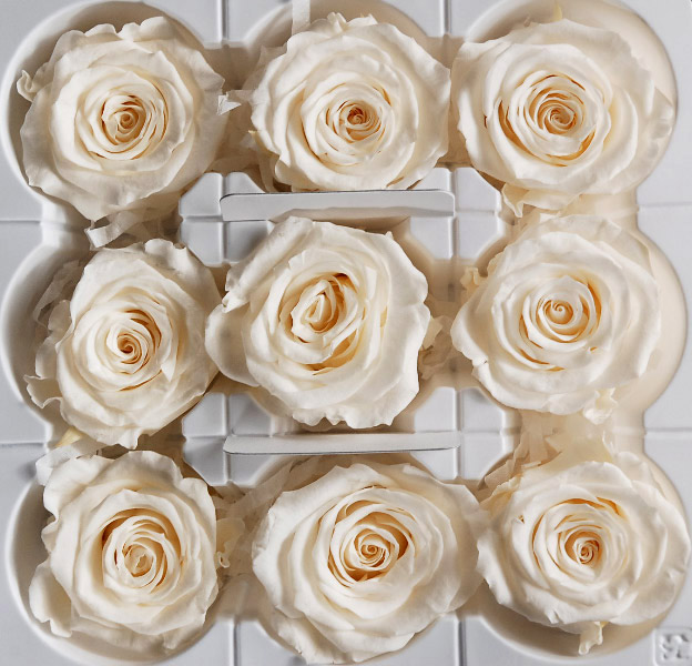 9 Antique White Kanon 2.25in Preserved Roses