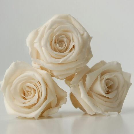 15 Preserved Porcelain White Roses