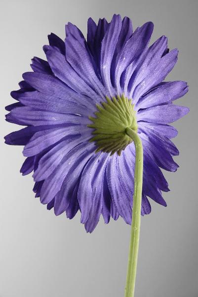 Purple Silk Gerbera Daisy Flowers 29in