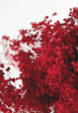 Baby's Breath Red  18in