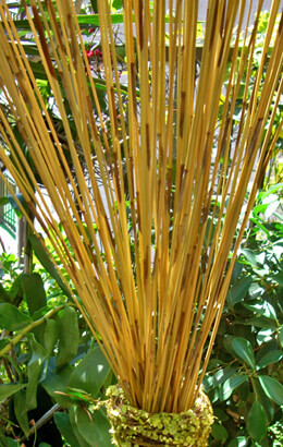 Bamboo Reeds 30in  (90 Pieces)