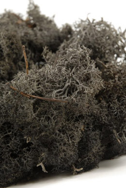 Black Reindeer Moss 11 ounces Natural Norwegian