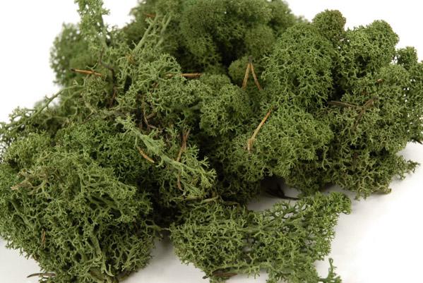 Reindeer Moss Dark Green 11oz Natural Norwegian