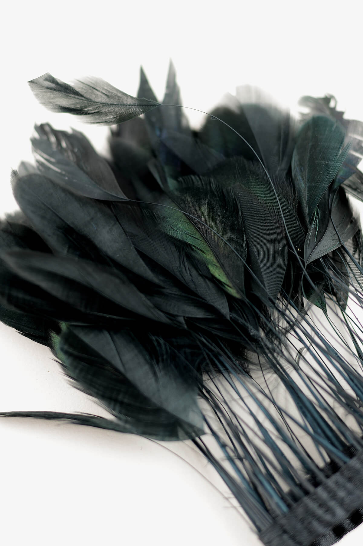 Coque Black Stripped Rooster Feathers 5in