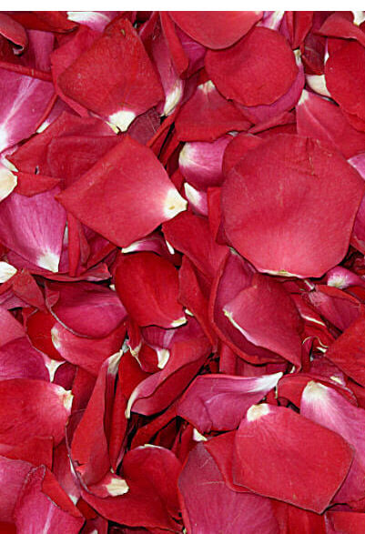 Soft Freeze Dried Red Rose Petals 5 cups
