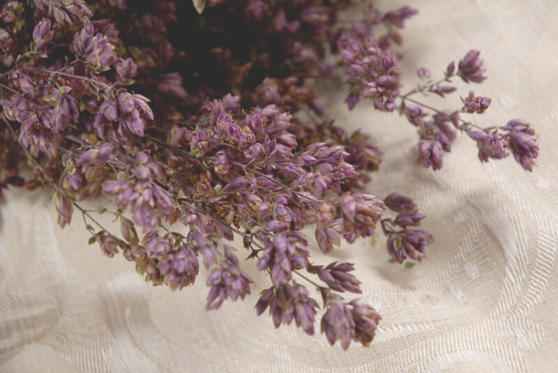 Santa Cruz Oregano Flowers  Dried