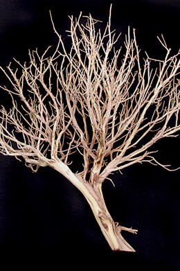 "Mini Sculpture Tree Sandblasted   18""-24"""
