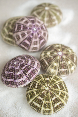 Sea Urchin Shells 6 Multicolor Shells  2.5in