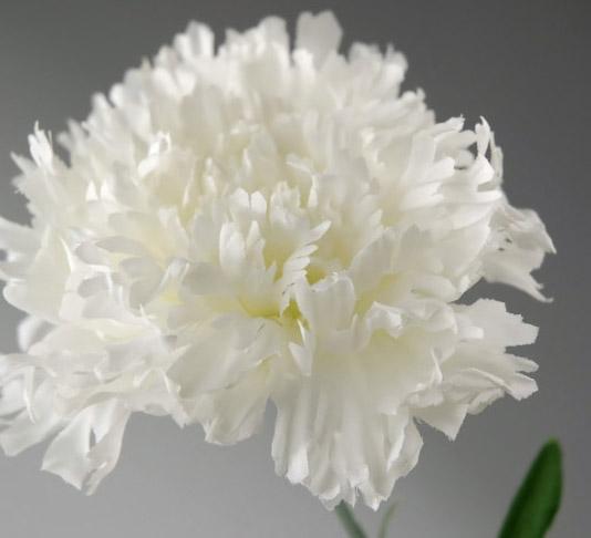 One Dozen White Silk Carnations