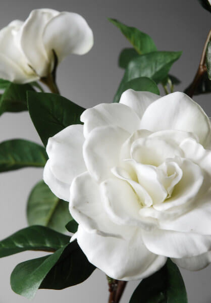 Silk Gardenias White
