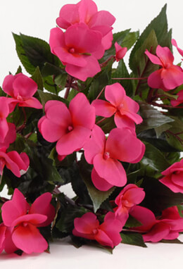 Beauty Red Silk Impatiens Flowers