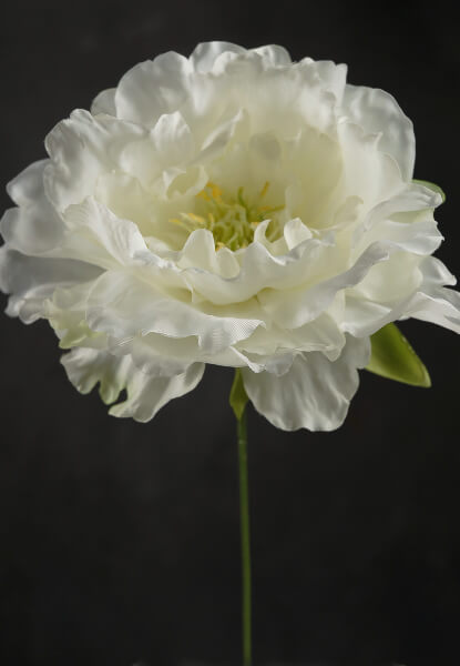 cream white silk peony flowers