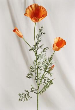 California Poppies Silk (Pack of 12) Orange