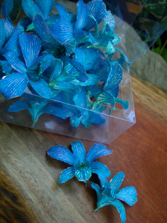30 Azure Lapis Preserved Orchid Flowers
