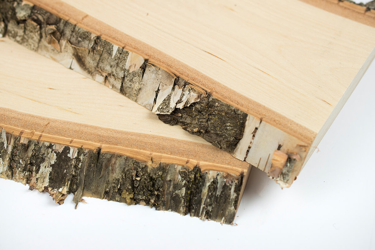 Birch wood planks with bark